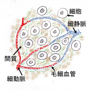 細胞と間質のコピー